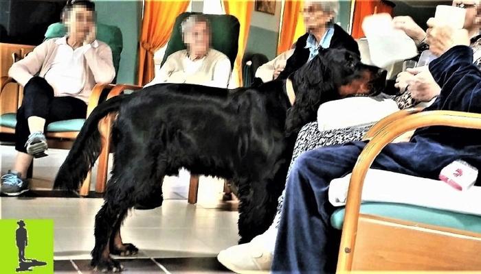 Ricongiungimento cane-padrone