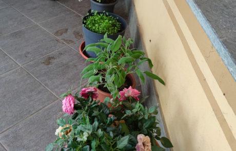 Giardinaggio Lisino